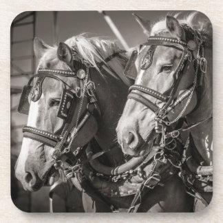 Belgium draught horses coaster