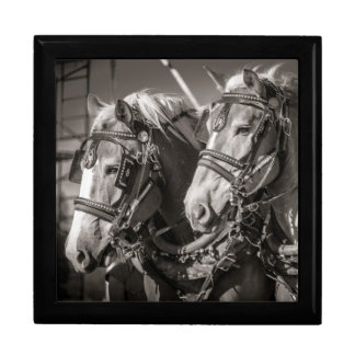 Belgium draught horses gift box