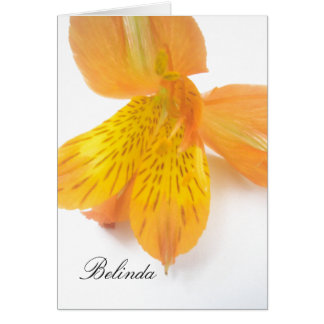Belinda Card