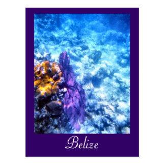 Belise Sea Fan Custom Postcard