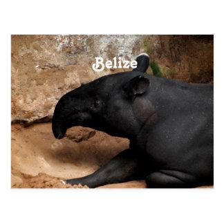 Belize Baird's Tapir Postcard
