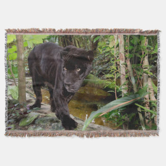Belize City Zoo. Black panther