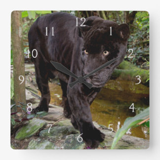 Belize City Zoo. Black panther Square Wall Clock