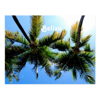 Belize Palm Trees Postcard