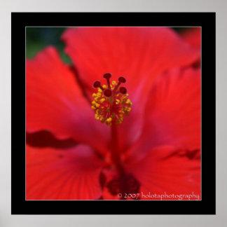Belize - Red Flower Poster