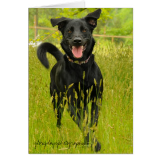 Bella, Happy to See You! Card