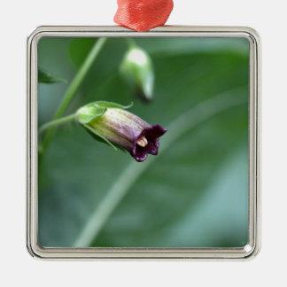 Belladonna or deadly nightshade (Atropa belladonna Metal Ornament