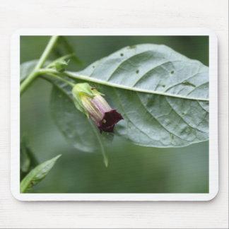 Belladonna or deadly nightshade (Atropa belladonna Mouse Pad