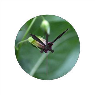 Belladonna or deadly nightshade (Atropa belladonna Round Clock