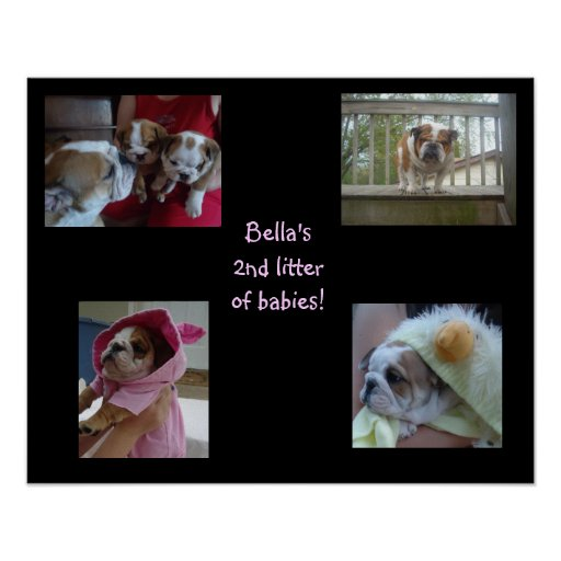 Bella's second litter posters