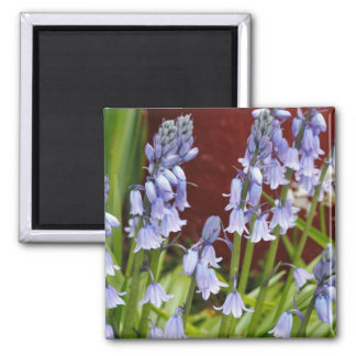 Bellflowers in Front of a Red Wall Square Magnet