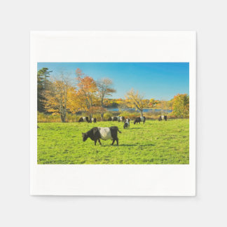 Belted Galloway Cows Grazing On Grass In Fall Disposable Serviette