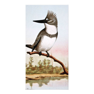 Belted Kingfisher Illustration Photo Card Template