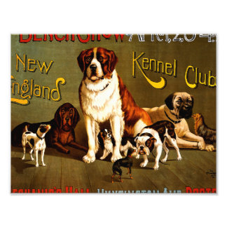 Bench Show. New England Kennel Club Photo Print