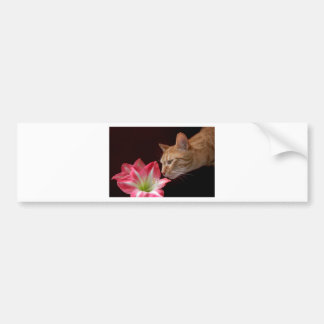 Bengal Cat Amaryllis Digital Photograph Bumper Sticker
