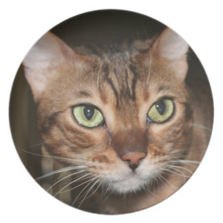 Bengal Cat Close Up Plate