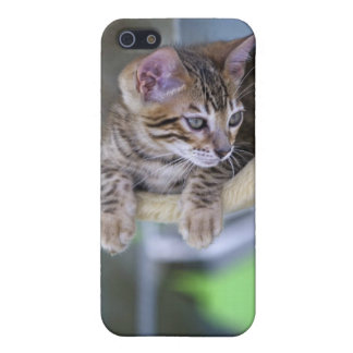Bengal Cat iPhone 5/5S Covers