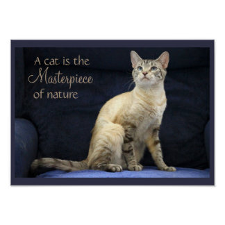Bengal Cat on Blue Poster