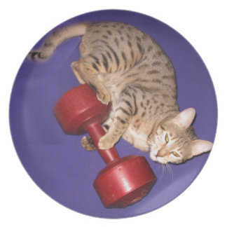 Bengal cat with dumbbell dinner plates