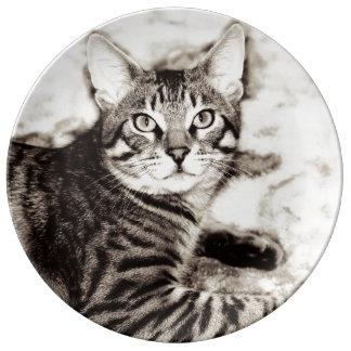 Bengal Photo Plate