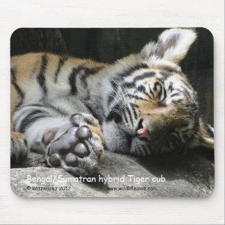 Bengal/Sumatran hybrid Tiger cub Mouse Pad