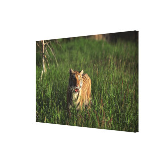 Bengal tiger gallery wrap canvas
