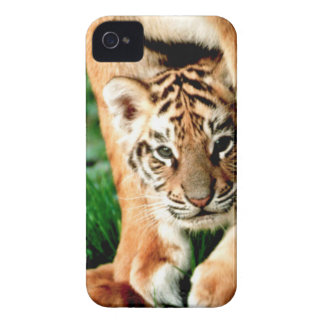 Bengal Tiger Cub Peers Out iPhone 4 Cover