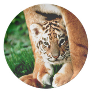 Bengal Tiger Cub Peers Out Plate