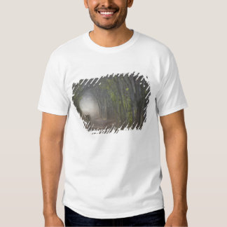 Bengal Tiger in the forest in Ranthambore T-shirts