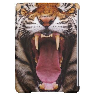 Bengal Tiger, Panthera tigris 2