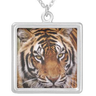 Bengal Tiger, Panthera tigris Square Pendant Necklace