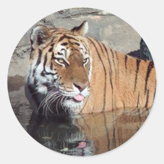Bengal Tiger Round Stickers