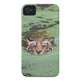 Bengal Tiger Swimming Case-Mate iPhone 4 Case