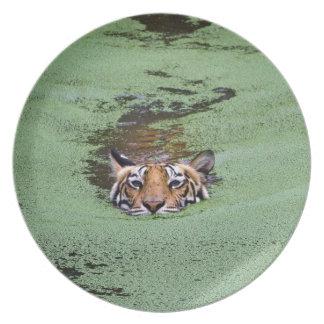 Bengal Tiger Swimming Plates