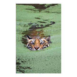Bengal Tiger Swimming Stationery