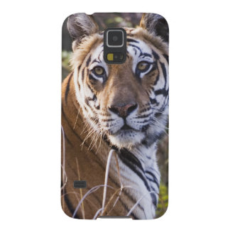 Bengal tigress in tall grass, trying to hunt, galaxy s5 cover