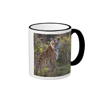 Bengal tigress in tall grass, trying to hunt, ringer mug