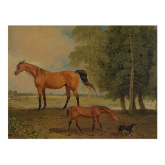 Benjamin Marshall - Broodmare with Foal Postcard