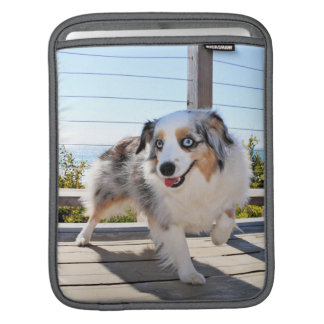 Bennett - Aussie Mini - Rosie - Carmel Beach iPad Sleeve