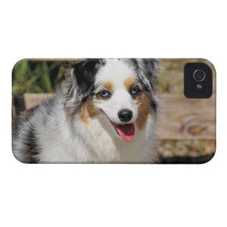 Bennett - Aussie Mini - Rosie - Carmel Beach iPhone 4 Cover