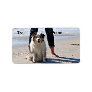 Bennett - Aussie Mini - Rosie - Carmel Beach Label