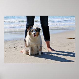Bennett - Aussie Mini - Rosie - Carmel Beach Poster