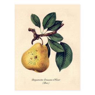 Bergamotte Crassane d'Hiver (Pear) Postcard