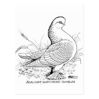 Berliner Pigeon Black and White Postcard