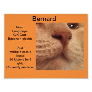 Bernard Orange cat profile Photo Print