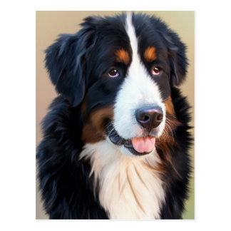 Berner Sennenhund Postcard