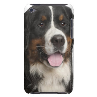 Bernese Mountain Dog (1 year old) iPod Touch Cover
