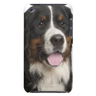 Bernese Mountain Dog (1 year old) Case-Mate iPod Touch Case