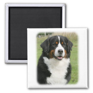 Bernese Mountain Dog 9Y236D-106 Magnet