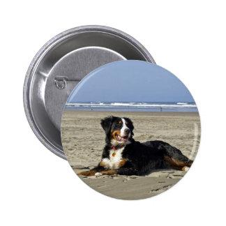 Bernese Mountain dog beautiful photo button pin